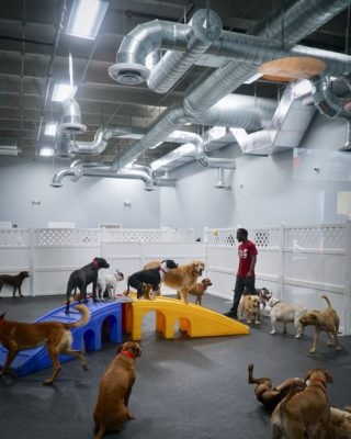 Interior play area at D.O.G. Hotels Wynwood