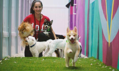 Good doggo runs inside D.O.G. Hotels Wynwood